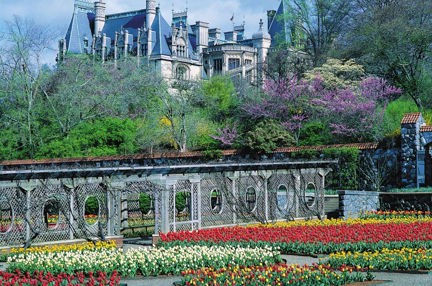 The Biltmore Estate Flower Blooms