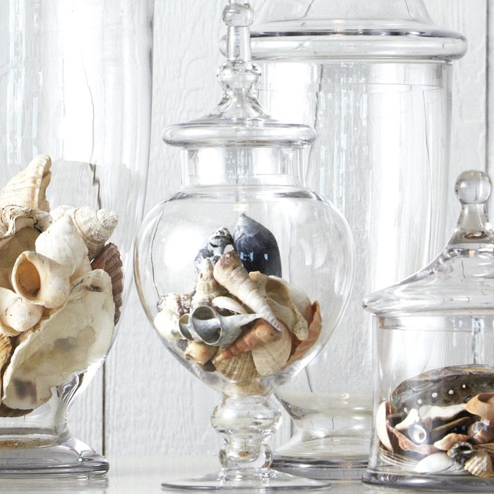 collectibles - sea shells via provincial home living (Australia)