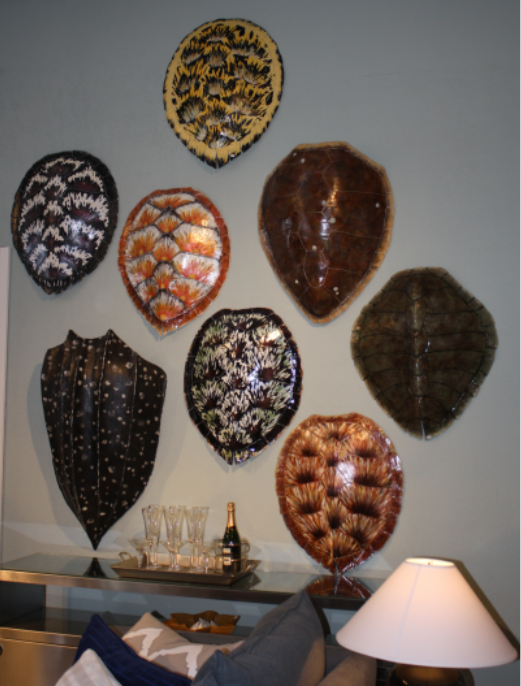 collection of tortoise shells