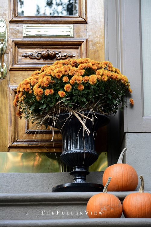 FALL DECOR DAVID FULLER