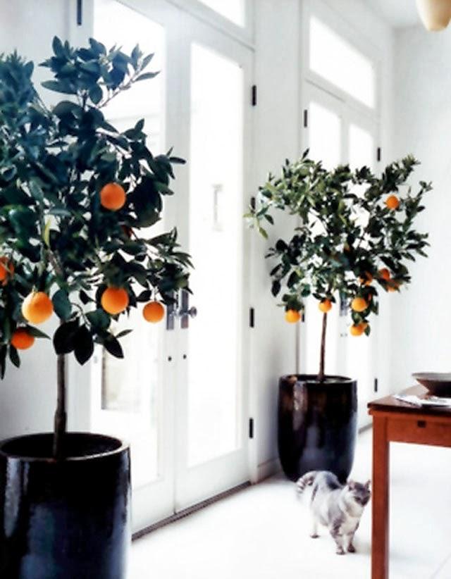 orange - martha stewart