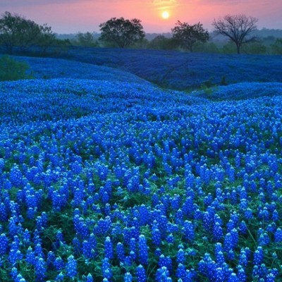 Texas Bluebonnets, Family Vacations: The Lady Bird Johnson Wildflower Center