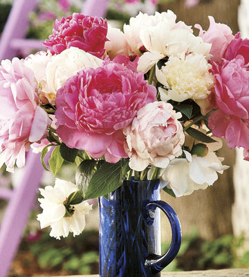 Alexandra Stoddard: Make Your Home A Garden of Happiness