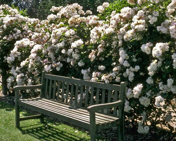 outdoorgardenbench& flowers