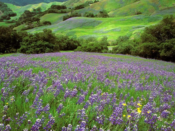 outdoorlavendar field