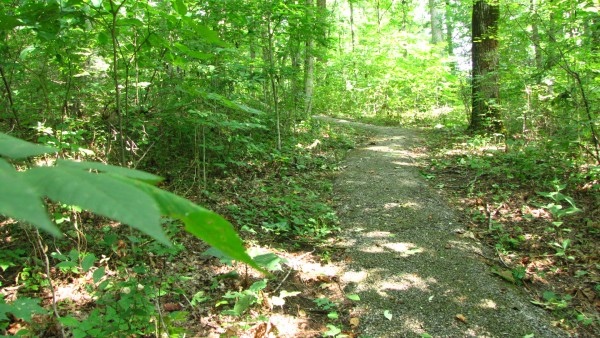 outdoorwoods