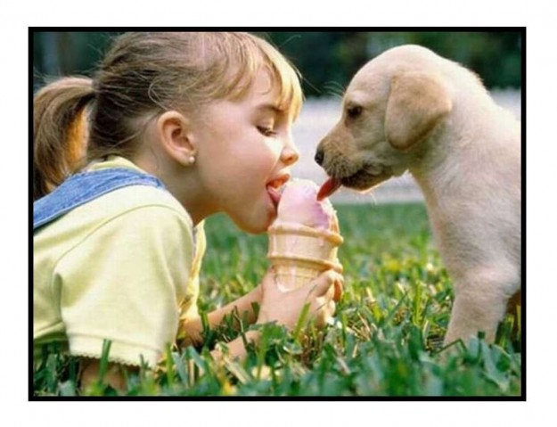 ice cream and dog