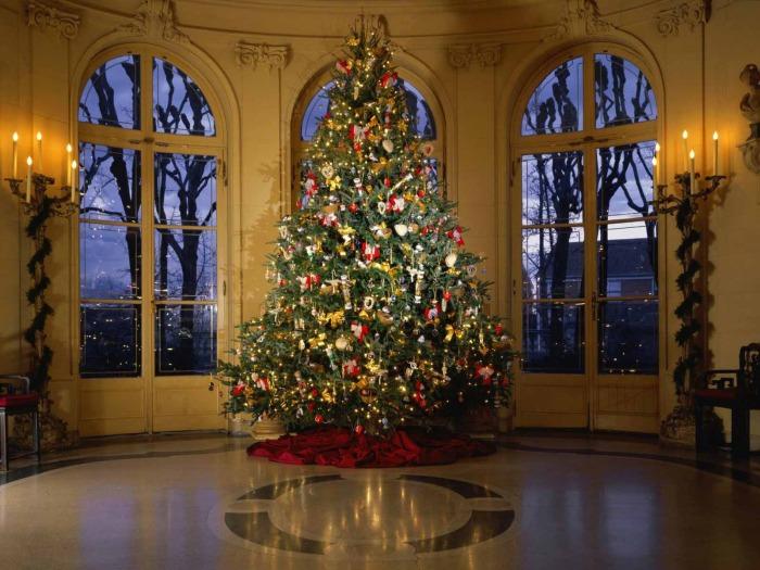 christmas-tree-pics-0121