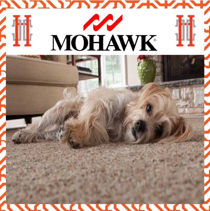 Mohawk carpet photo with dog