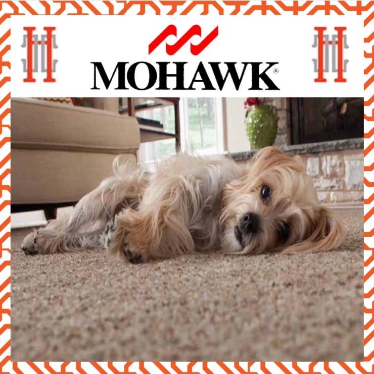 Mohawk carpet photo with dog
