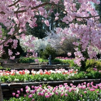 Beautiful, Blossoming Spring Gardens!