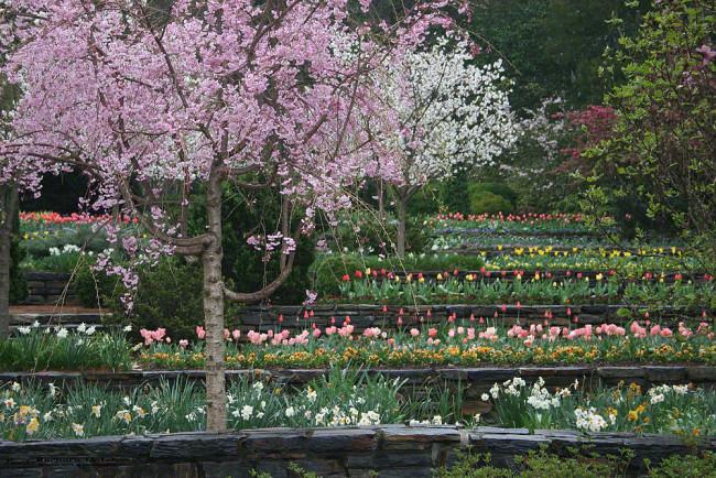 Duke Gardens Spring Flowers2