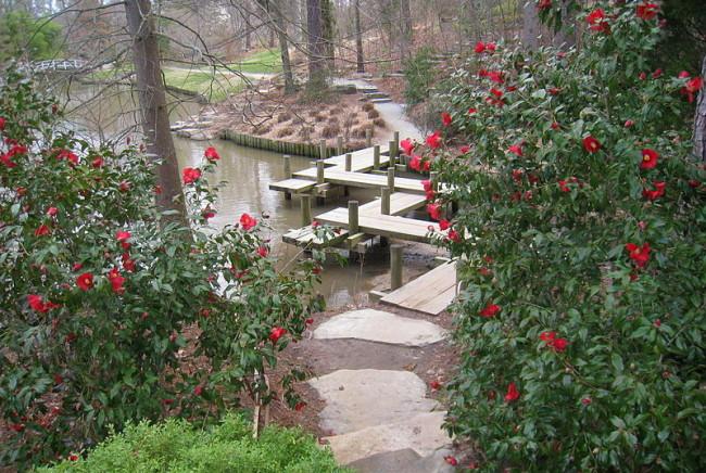 Dukegardenswaterbushes (1)
