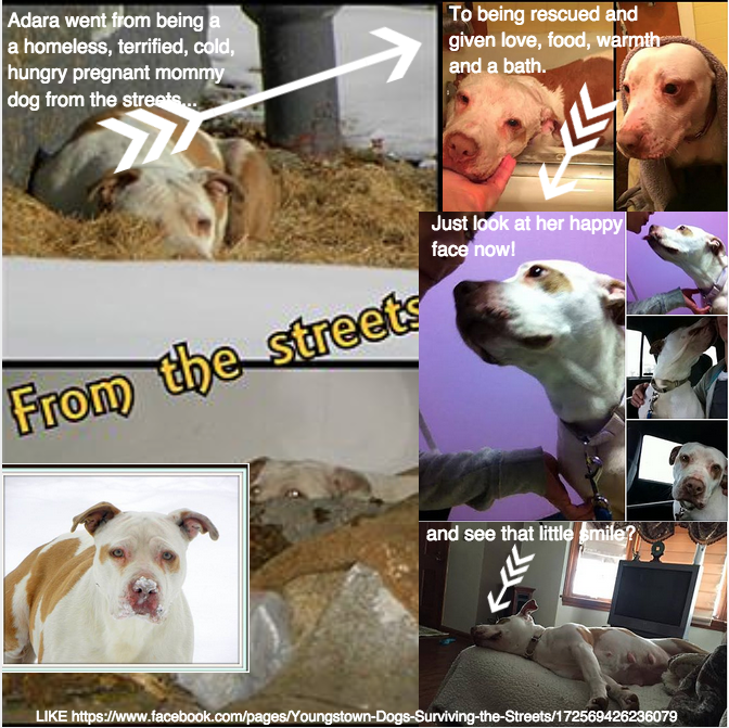 Rescue Dogs graphic