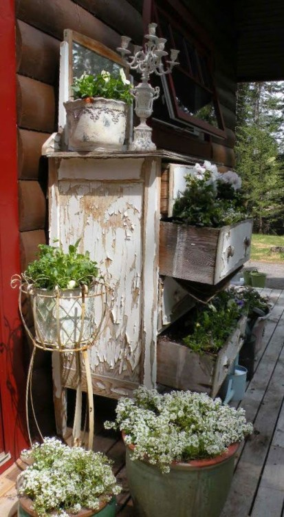 Rustic Container Gardening, with an old chip paint finished dresser photograph