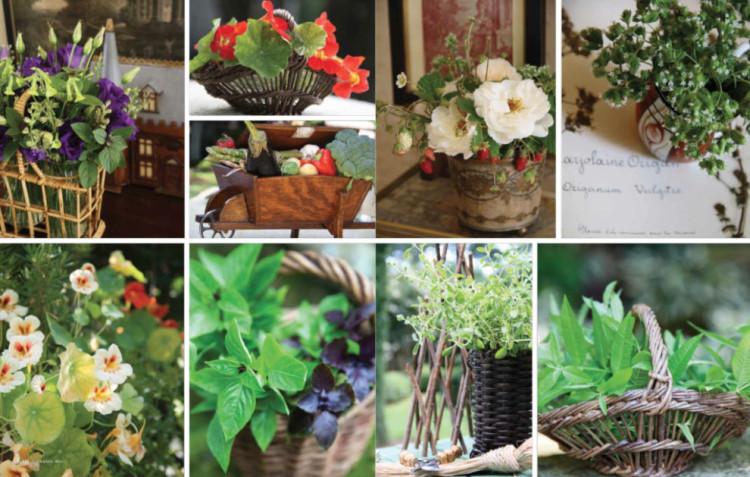 Charlotte Moss flower photos