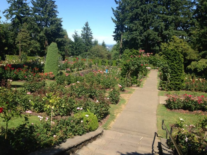 Portlandrosewtrees