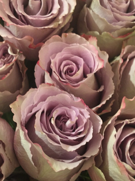 Fresh lavender roses at Global Views || Fall 2015 #HPMKT || Image Credit: Leslie Carothers for Hadley Court