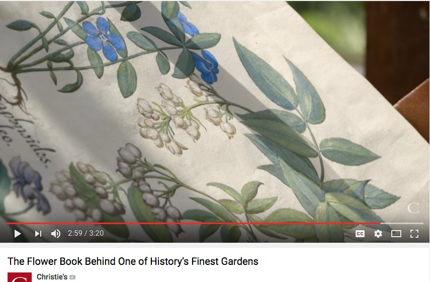 A video of the Hortus Eystettensis, the most famous book of botanicals prints in existence.