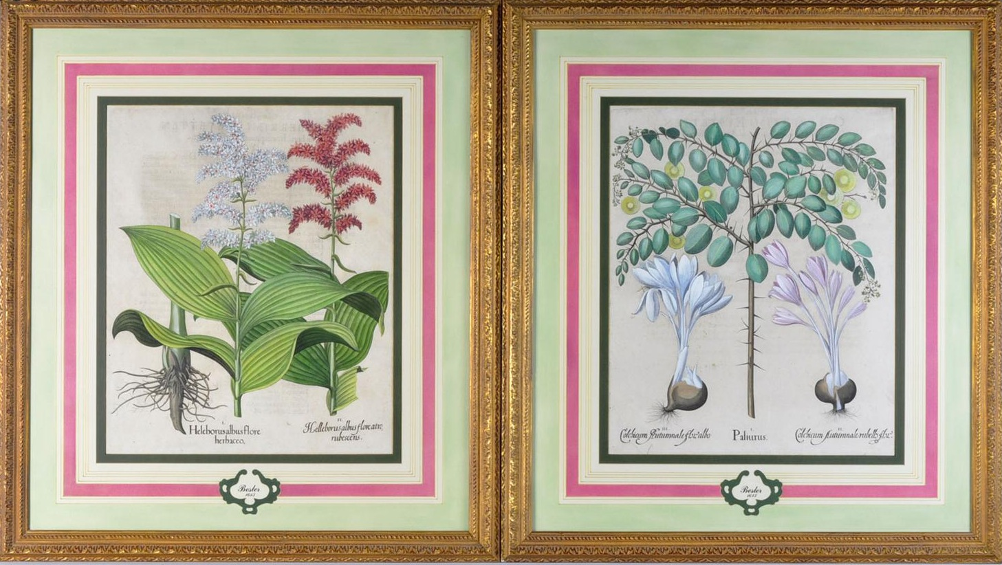 French matts on antique botanicals by Basilius Besler photo