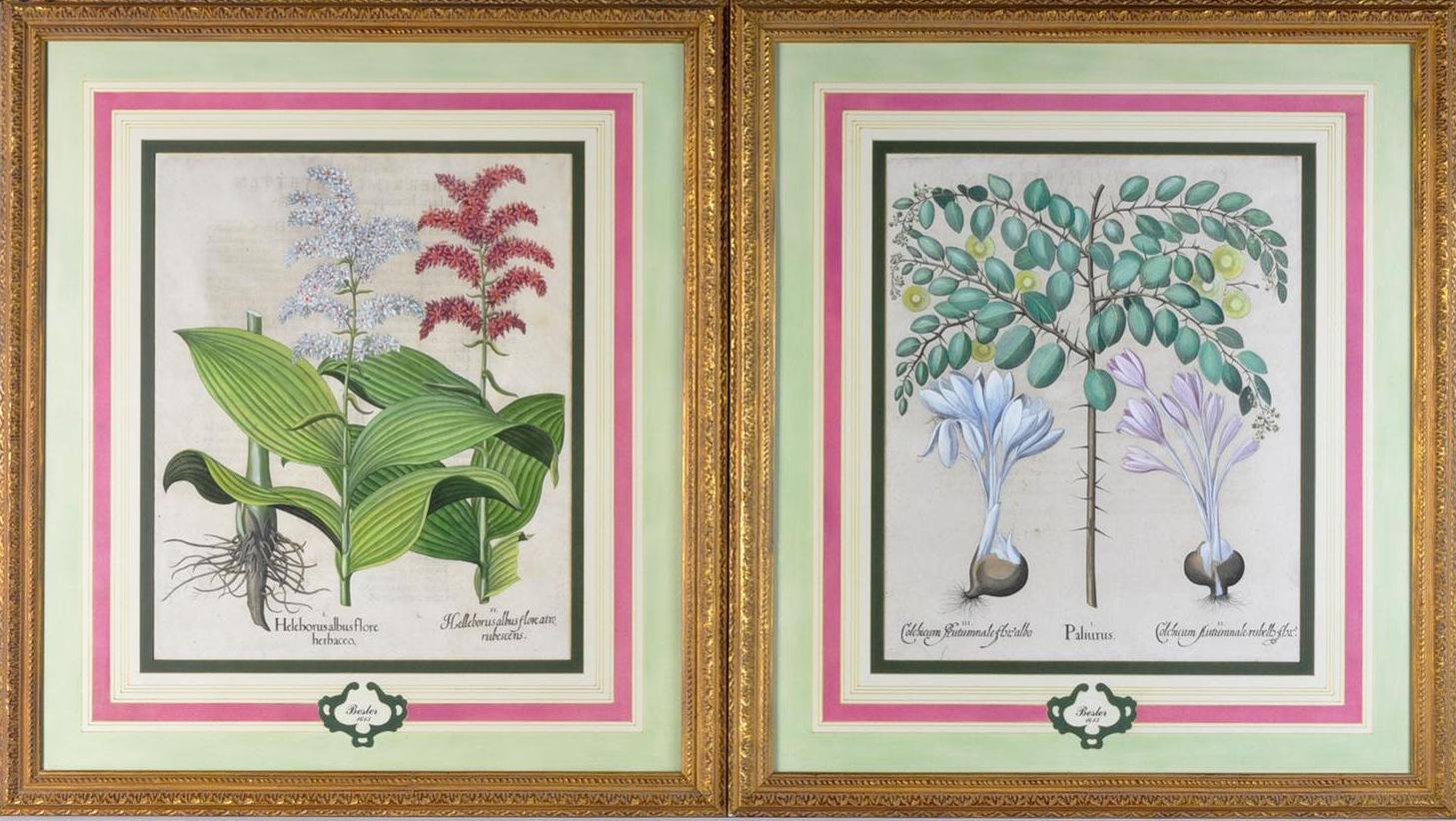 French matts on antique botanical prints by Basilius Besler