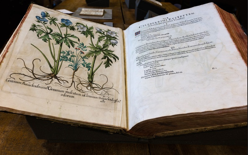 Photo of Hortus Eystettensis by Basilius Besler, the world's most famous book of antique botanical prints