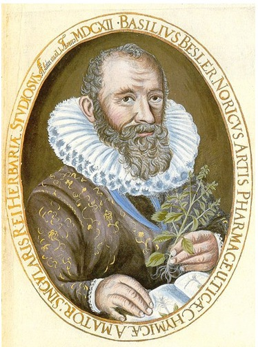 Photo of An engraving of botanist Basilius Besler, author of the most famous book in the world on antique botanical prints