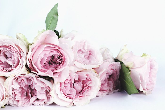How to make your fresh cut flowers last longer, trim them weekly and refresh the water! Click to read even more tips and tricks.