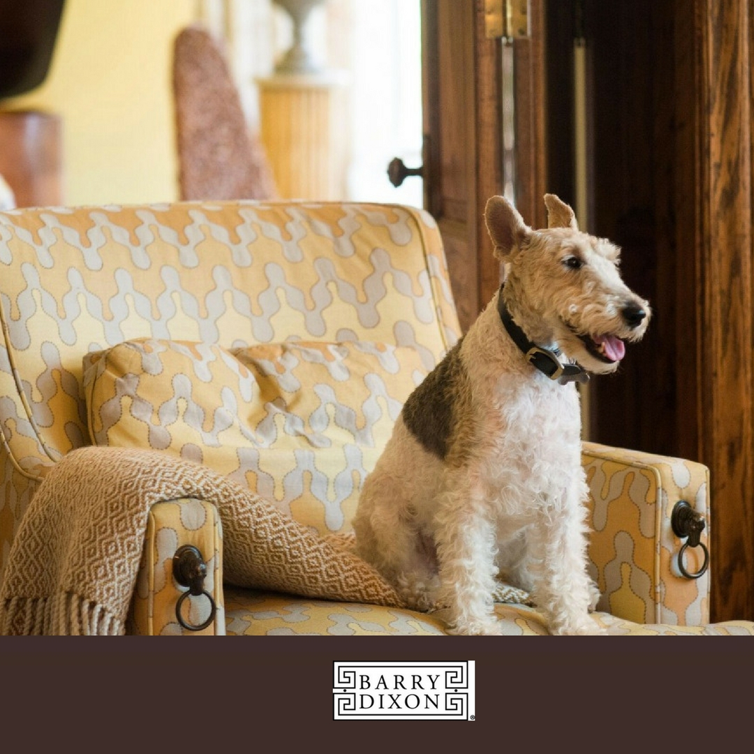 Dinah, Barry Darr Dixon's wire haired fox terrier, his constant companion.
