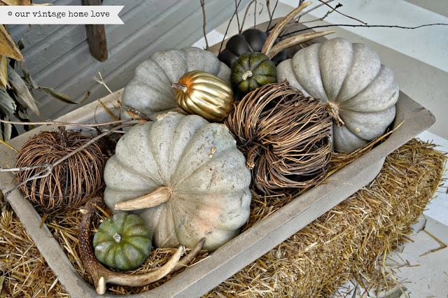 Tray of pumpkins with one gold-painted pumpkin