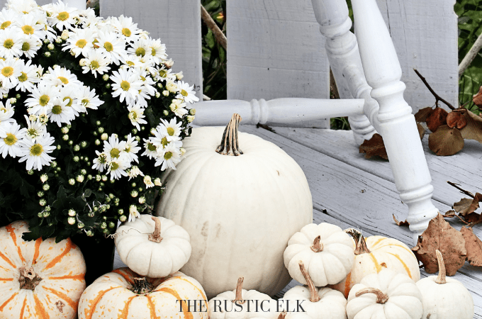 White colored pumpkin decorations