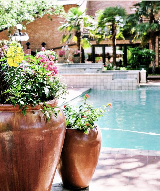 Swimming Pool Landscaping - Greenery