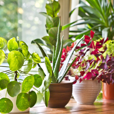 Top 5 Indoor Houseplant Trends of 2020