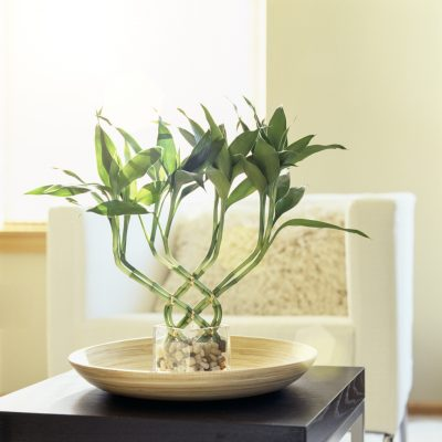 8 Houseplants That Improve Your Home's Look & Indoor Air Quality