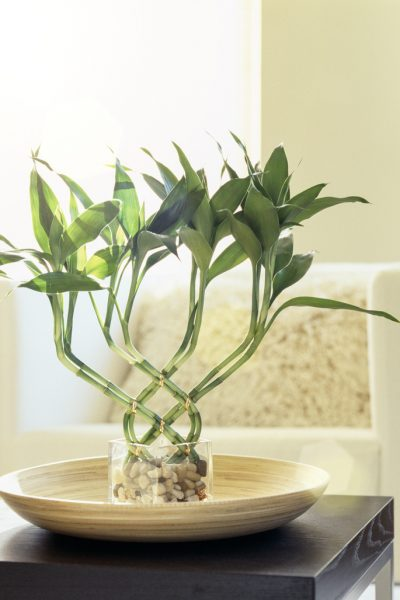 houseplants that improve indoor air quality