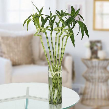 bamboo houseplants that improve indoor air quality